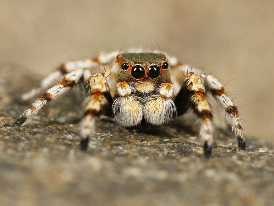 ciekawostki o pająkach