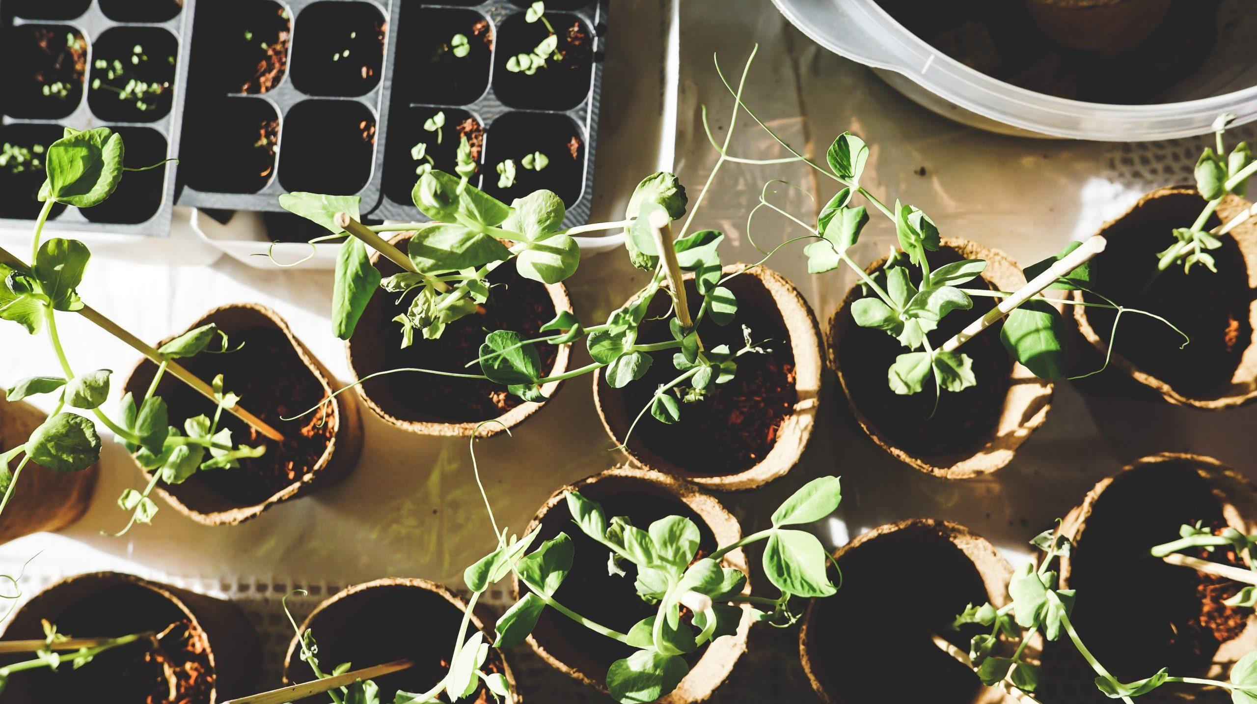 jak-siac-sadzic-warzywa-w-ogrodzie