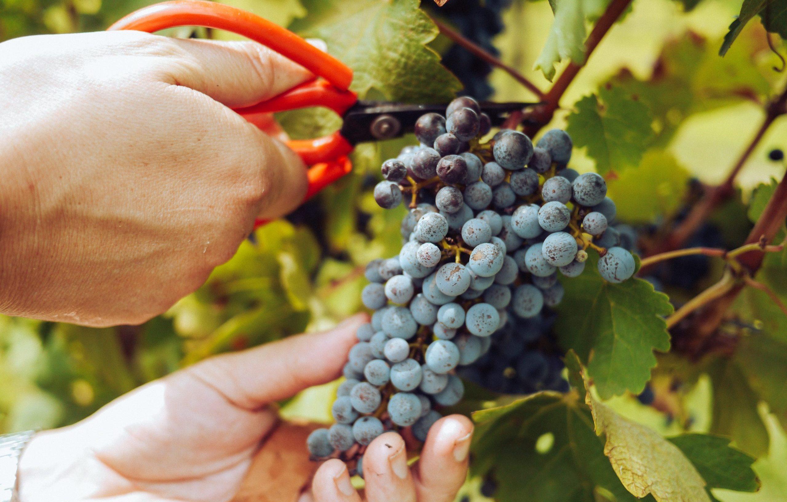 wino-organiczne-polskie